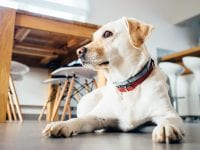 What Type of Joint Supplements Should I Get My Older Dog?