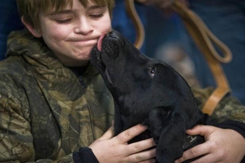 dog licking boy