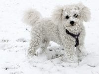 How Do I Get My Dog to Poop Outside in the Winter?
